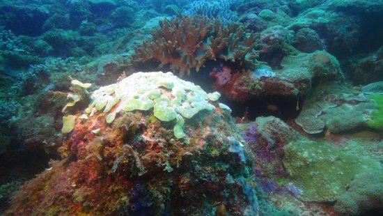 Ambatoloaka, Madagascar: corail