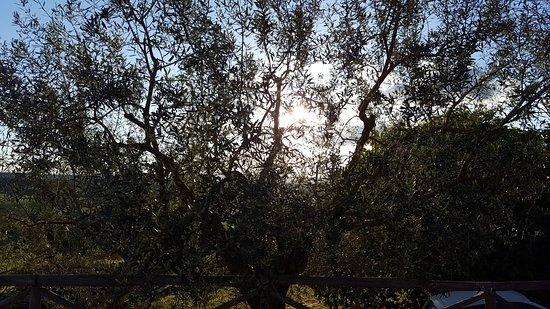 Magliano Sabina, Italy: ULIVO