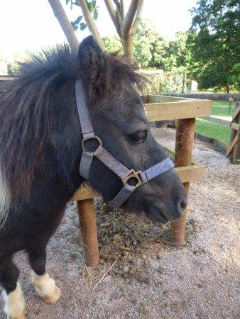 Malanda Falls Caravan Park: A gorgeous resident Pony.