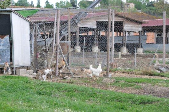 Agriturismo I Due Mondi Picture