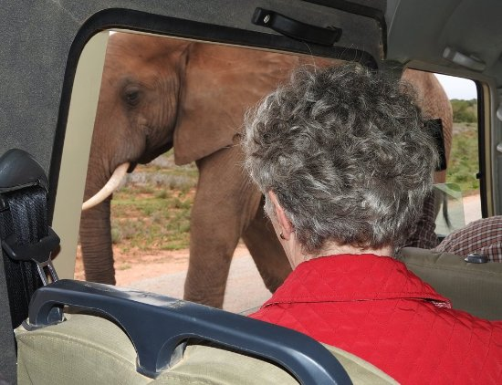 Alan Tours: Up close at Addo