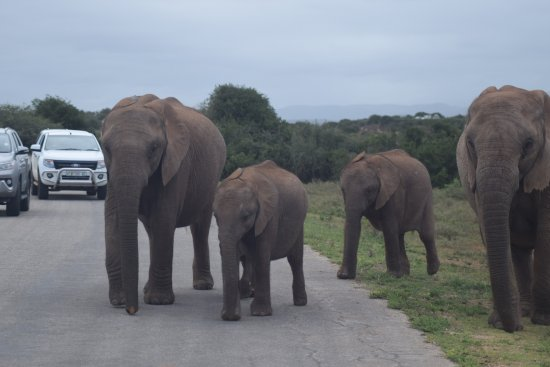 Alan Tours: Just passing by at Addo Elephant Park