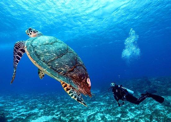 Cozumel Snorkeling Tours Tripadvisor