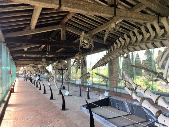 Calci, Italy: cetacei