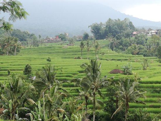 Jatiluwih Green Land: IMG_20170418_132522_large.jpg