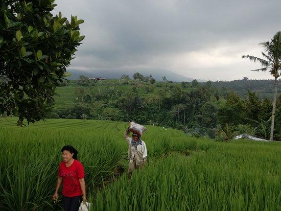 Jatiluwih Green Land: IMG_20170418_134436_large.jpg