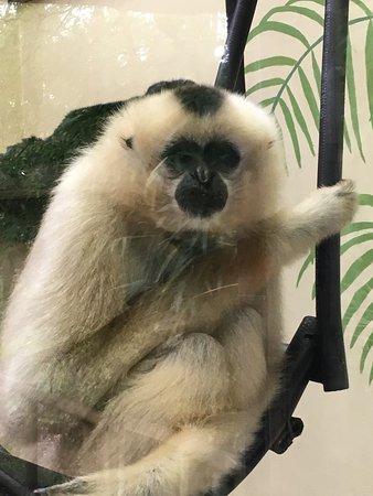 Monkey World: photo0.jpg