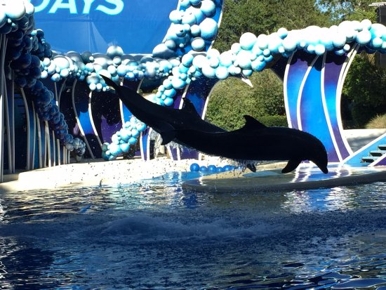 Seaworld San Diego Vip Tour Review