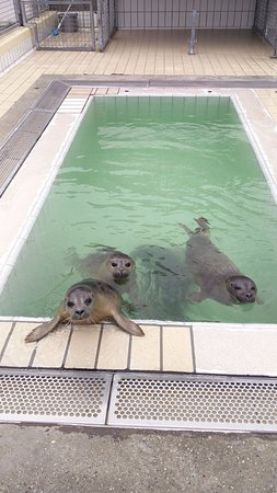 Pieterburen, Nederland: Seals