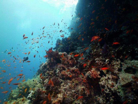 Gauteng, South Africa: Red Sea diving trip