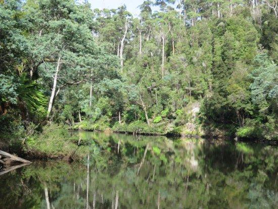 Arthur River, Australia: Unspoilt scenery along the river