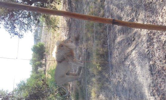 Западно-Капская провинция, Южная Африка: 20170403_160713_large.jpg
