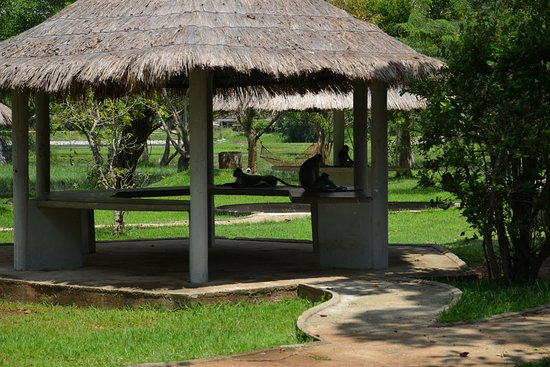Habarana Village by Cinnamon: Monkey family relaxing in front of the rooms near the lake