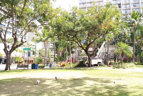 ワイキキ ゲートウェイ ホテル , ホテル下にある公園?(右側の建物がホテル外観)