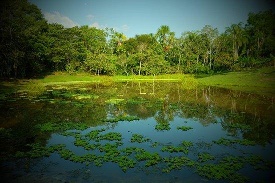 lake at caya shobo ayahuasca healing centre iquitos peru