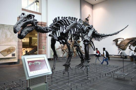 Naturmuseum Senckenberg: 恐龍化石