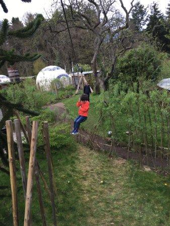 Dome Garden: Zip Wire