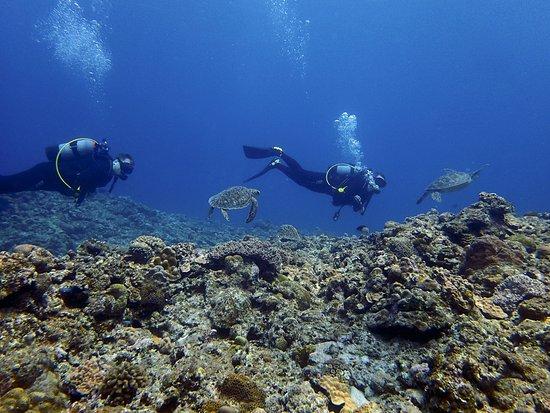Kadena-cho, Japan: Mergulhadores com as Tartarugas - Aloha Divers Okinawa