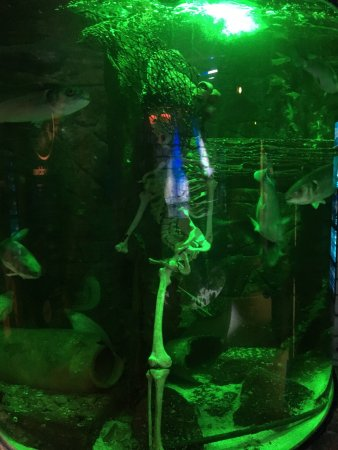 SEA LIFE Speyer: photo8.jpg