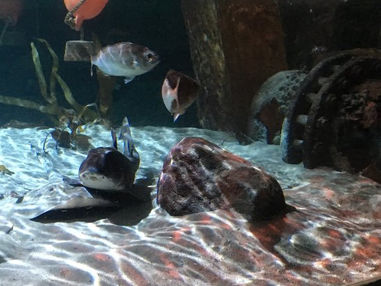 SEA LIFE Speyer: photo9.jpg