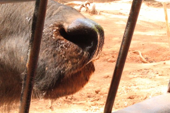 Pine Mountain, GA: Up close and personal with animals