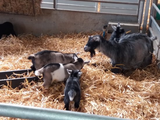 High Wycombe, UK: Easter visit to odds farm park