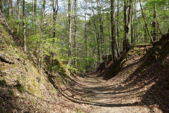 Natchez, MS: sunken trail
