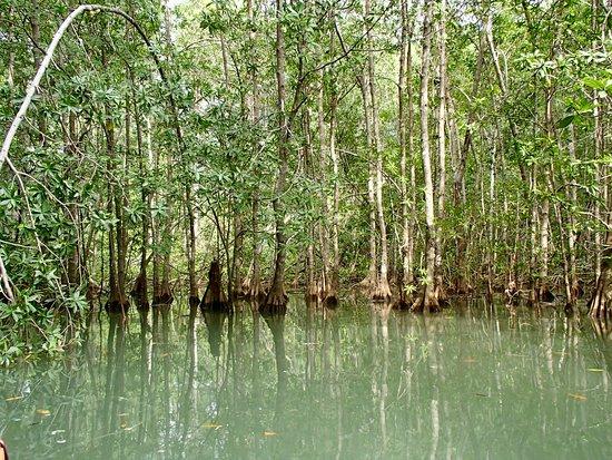 Dominical, Costa Rica: Mangrove