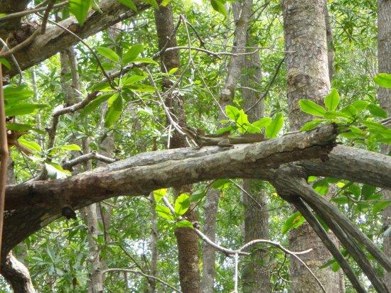 Dominical, Costa Rica: A native