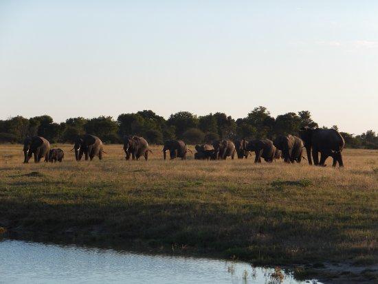 Zdjęcie Hwange National Park