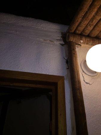 Hotel Villas Delfines: photo1.jpg
