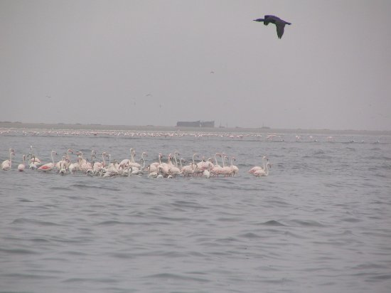 Walvis Bay, Namibia: flying over flamingoes