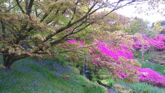 Haywards Heath, UK: Wakehurst Gardens