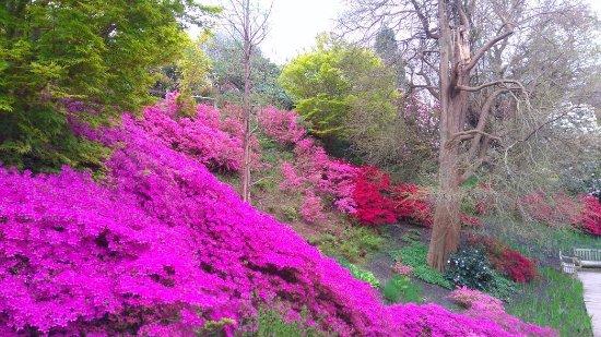 Haywards Heath, UK: Wakehurst Gardens