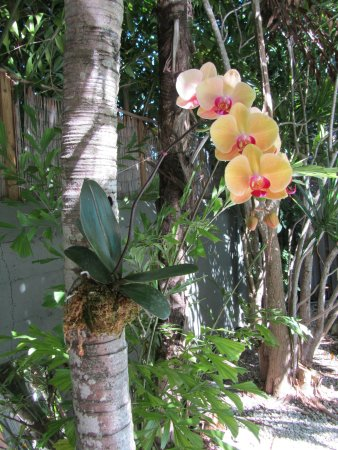 Suite Dreams Inn: Orchids everywhere