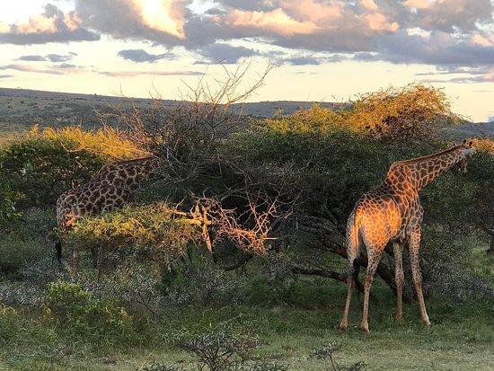 Ohrigstad, South Africa: photo2.jpg