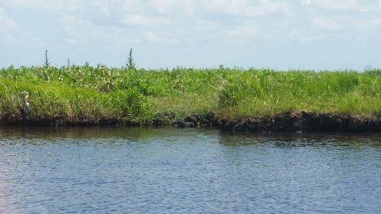 Cocoa, Floryda: birds along the shore
