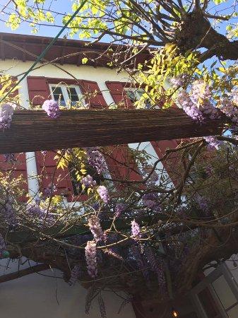 Itxassou, France: les glycines de la terrasse
