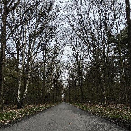 Houten, Nederland: forest