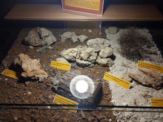 Μουσείο Φυσικής Ιστορίας Κρήτης: Μ.Φ.Ι.