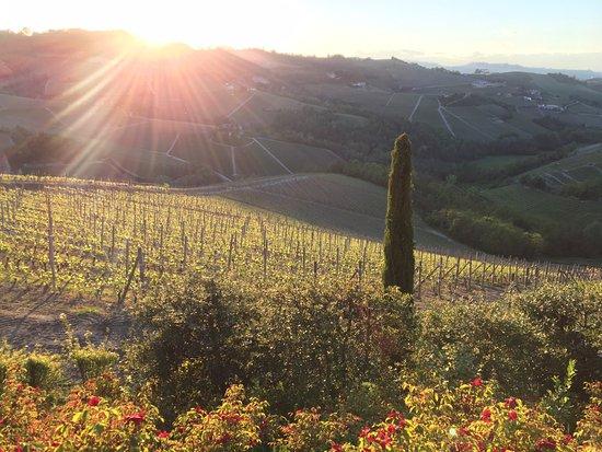 Serralunga d'Alba, Italia: Vista dal giardino