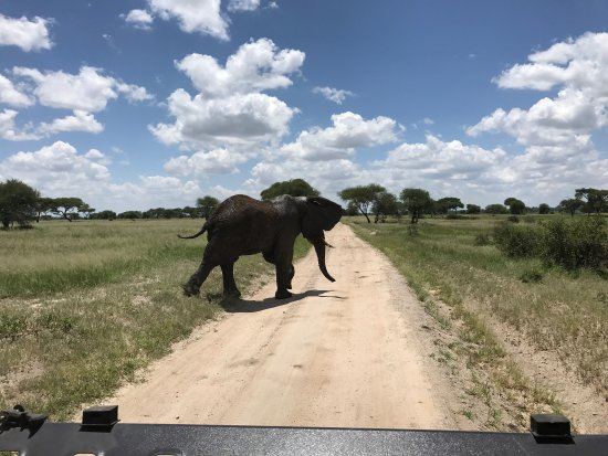 Tarangire National Park, Tanzânia: photo2.jpg