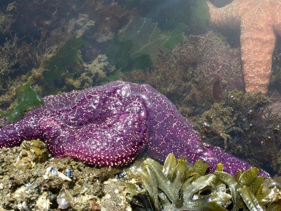 Lummi Island, WA: Tide pooling!