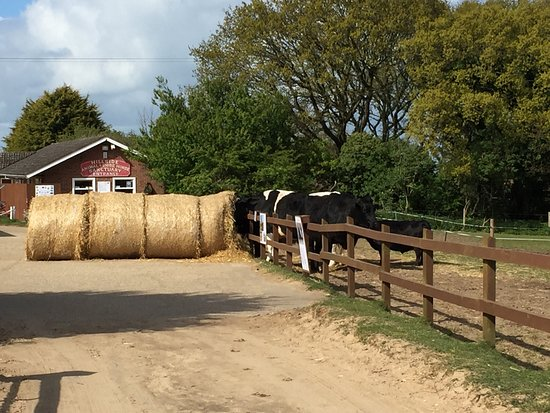West Runton, UK: A great day out at Hillside Shire Horse Sanctuary