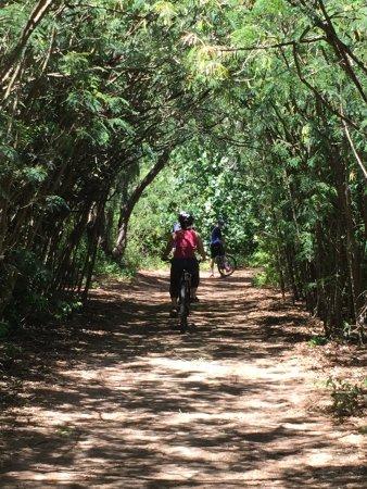 Kahuku, Havai: Tree-lined avenues