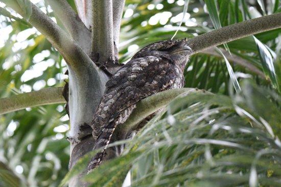 Mossman, Australia: photo1.jpg