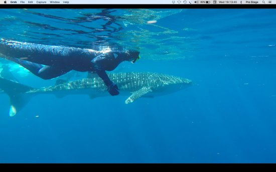Ningaloo Blue Dive: Snorkelling with a Whale Shark