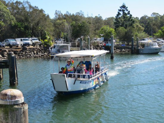 Brunswick Heads, Australien: Arriving back in harbour after a Morning Eco Rainforest River Cruise
