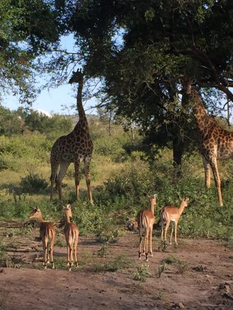 Madikwe Game Reserve, Güney Afrika: photo4.jpg