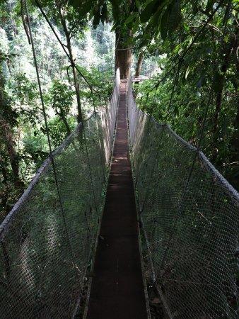 Паррита, Коста-Рика: Hanging Bridges In The Canopy